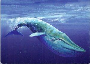 Whale 'Fauna Polara' Unused Vintage Postcard C3