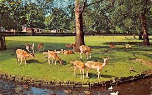 Netherlands Valkenburg Hertenkamp Deer Birds Animals