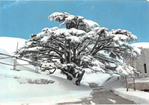 Lebanon The Cedars, Liban, sous la neige, snowy view