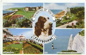 Sussex Postcard - Thinking of You at Eastbourne   2956