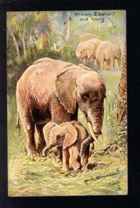 033900 African ELEPHANT. By SCRIVENER. Vintage TUCK PC