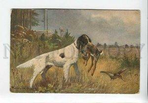 3183027 Bird hunt hare woodcock Setter MULLER Vintage postcard