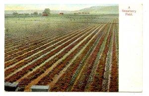 A Strawberry Field