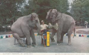 ST. LOUIS, Missouri, 1950; Elephant Training, St. Louis Zoo