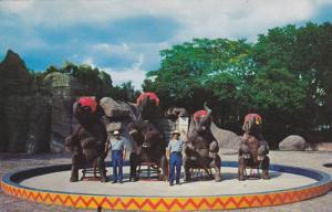 Elephants Sitting Down During Elephant Show, Routine Elephant Performance, Zo...