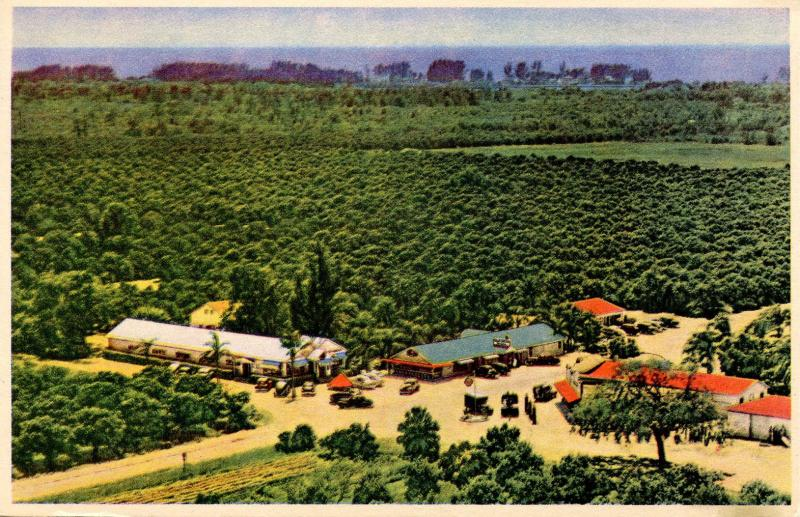FL - Largo. Indian Rocks Fruits and Gardens
