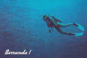 Guam Underwater Scene With Diver and Barracuda