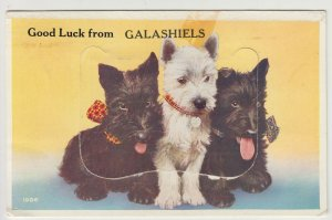 Selkirkshire; Good Luck From Galashiels Novelty Foldout PPC By Valentines, 1966