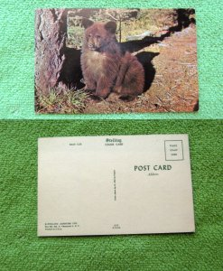Postcard Bear Cub Relaxing In Forest, Wildlife, Animal, Mammal