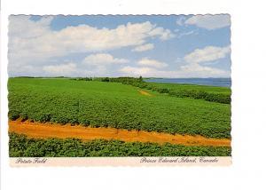 Potato Field, Prince Edward Island