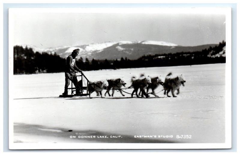 Postcard On Donner Lake, CA Dog Sled Race Husky RPPC H11