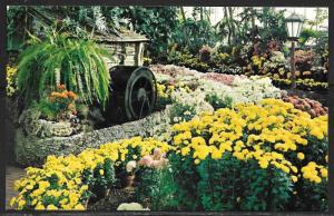 Missouri, St. Louis, Forest Park, Jewel Box, Chrysanthemum show, unused