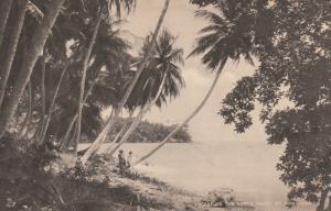 Scene on the North Coast , ST.ANN , Jamaica, 00-10s ; TUCK