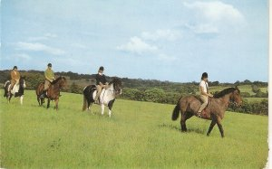 Pony trecking. Horses and riders Vintage English Salmon postcard