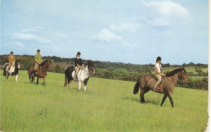 Pony trecking. Horses and riders Vintage English Salmon postcard