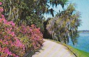 South Carolina Charleston Magnolia
