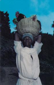 HAITI, West Indies, 40-60s; Woman carrying basket of roosters for sale