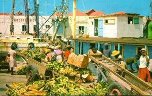 Barbados Bridgetown Careenage Scene Sorting Bananas