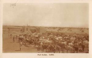 Port Sudan Sudan Cattle Real Photo Antique Postcard J59027
