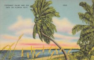 Cocoanut Nut Palm Trees and Sea Oats On The Florida Keys