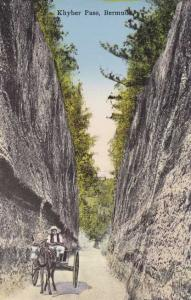 Donkey and Cart - Khyber - Kyber Pass - Bermuda - DB