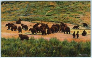 YELLOWSTONE NATIONAL PARK  ca 1940s  GRIZZLY BEAR FEEDING GROUNDS LinenPostcard