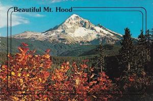 Washington Mount Hood Beautiful Mount Hood