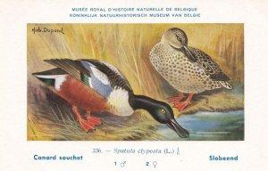 Northern Shoveler Spatula Clypeata WW2 Bird Vintage Rare Postcard