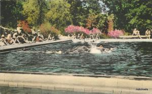 1920s Hand Colored Seigler Hot Springs Swimming Pool CALIFORNIA Postcard 1606