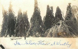Westby Wisconsin~Ice: Silver Thaw~Trees Covered & Bent Down~c1918 RPPC