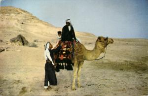 israel palestine, Native Bedouin on Camel in the Desert (1960s) Palphot Postcard