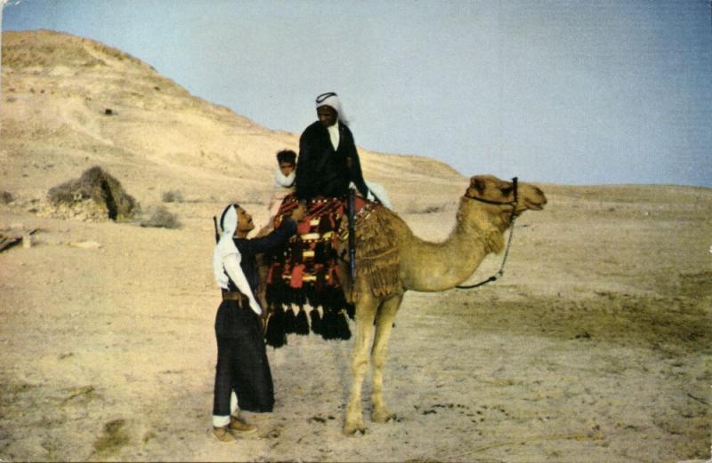 israel palestine, Native Bedouin on Camel in the Desert (1960s) Palphot Postcard