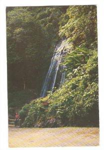 Beautiful Coca Falls at El Yunque,the highest mountain peak in Puerto Rico, 4...