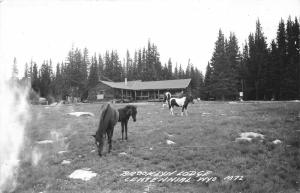 Centennial Wyoming~Brooklyn Lodge~Horses on Ropes Grazing in Meadow~1957 RPPC
