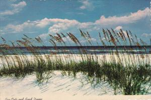 Florida Sea Oats and Sand Dunes Along The Coast 1977
