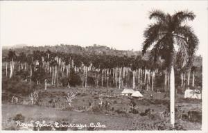 Cuba Royal Palm Landscape Scene Real Photo