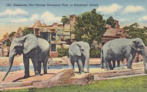 Elephants, The Chicago Zoological Park At BROOKFIELD, Illinois, 1930-1940s