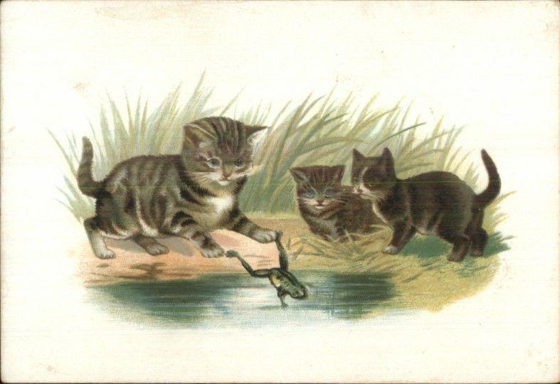 Kittens Kitty Cats Play w/ Frog Card - Blank Backside - Litho