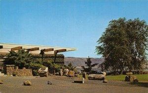 Vantage Washington~Petrified Logs Outside Ginkgo Forest Museum~1960s Postcard