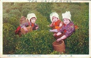 Japan Woman Picking Tea Leaves 04.94