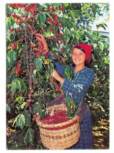 Costa Rica Girl harvesting Coffee Franked Sc# RA59 C556 1970s Airmail to US