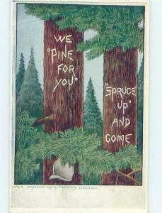 Bent Corner c1910 comic WE PINE FOR YOU - CARVED INTO PINE TREE HL2928