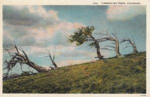 COLORADO, 1930-40s; Timberline Trees