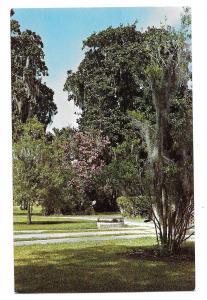 SC Brookgreen Sculpture Gardens Pawleys Island Murrells Inlet Vtg Postcard 1961
