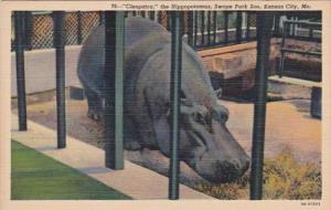 Missouri Kansas City Cleopatra The Hippopotamus Swope Park Zoo Curteich