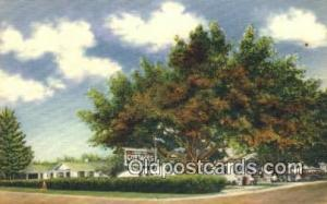 Shady Nook Cottages, St. Petersburg, FL, USA Motel Hotel Postcard Post Card O...