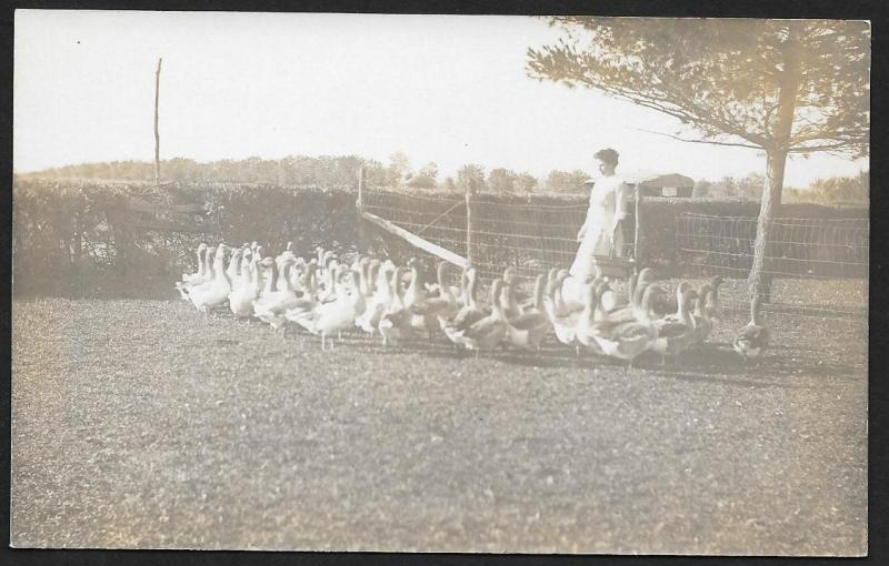 Woman & Geese in Field at Fence RPPC Unused c1910s