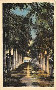 Royal Palms  Trees FL