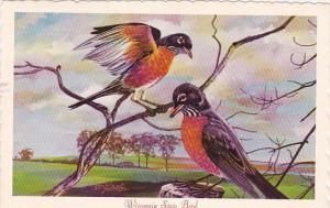 Robin Wisconsin State Bird
