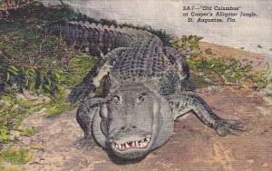 Old Columbus At Casper's Alligator Jungle Saint Augustine Florida
